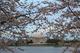 Photo photo-arbres : arbre : 22525