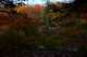Photo photo-arbres : arbre : 22526