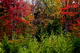 Photo photo-arbres : arbre : 22537