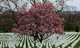 Photo photo-arbres : arbre : 22538