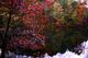 Photo photo-arbres : arbre : 22544