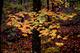 Photo photo-arbres : arbre : 22556