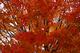 Photo photo-arbres : arbre : 22568