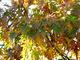 Photo photo-arbres : arbre : 22630