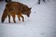 Photo photo-faune : faune : 23250
