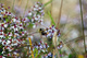 Bee Flowers Spring Insect nature de                   Carey52 provenant de Photo Faune