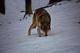Photo photo-faune : faune : 23305