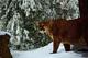 Photo photo-faune : faune : 23315