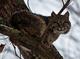 Photo photo-faune : faune : 23321
