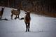 Photo photo-faune : faune : 23324