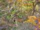 Photo photo-faune : faune : 23444