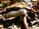 Photo photo-faune : faune : 23473