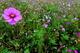 Photo photo-fleurs : fleurs : 23622