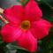 Photo photo-fleurs : fleurs : 23629