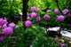 Photo photo-fleurs : fleurs : 23637