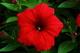 Photo photo-fleurs : fleurs : 23645
