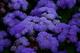 Photo photo-fleurs : fleurs : 23653