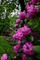 Photo photo-fleurs : fleurs : 23662