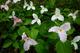 Photo photo-fleurs : fleurs : 23664