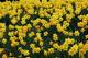 Photo photo-fleurs : fleurs : 23665