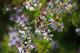 Photo photo-fleurs : fleurs : 23686