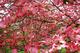 Photo photo-fleurs : fleurs : 23701