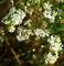 Photo photo-fleurs : fleurs : 23703