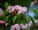 Photo photo-fleurs : fleurs : 23704