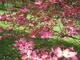 Photo photo-fleurs : fleurs : 24044