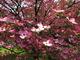Photo photo-fleurs : fleurs : 24073