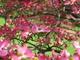 Photo photo-fleurs : fleurs : 24085