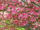 Photo photo-fleurs : fleurs : 24094