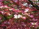 Photo photo-fleurs : fleurs : 24098