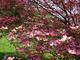 Photo photo-fleurs : fleurs : 24140