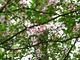 Photo photo-fleurs : fleurs : 24160