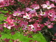 Photo photo-fleurs : fleurs : 24175