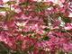 Photo photo-fleurs : fleurs : 24180