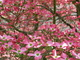 Photo photo-fleurs : fleurs : 24189