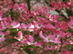 Photo photo-fleurs : fleurs : 24239