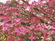 Photo photo-fleurs : fleurs : 24328